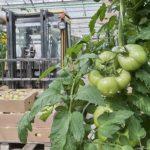 Производство овощей закрытого грунта увеличилось на 24%