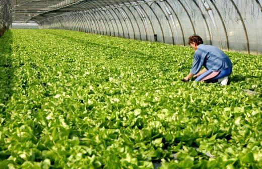 Закон о «зеленом бренде» может вступить в силу в РФ с 2021 года