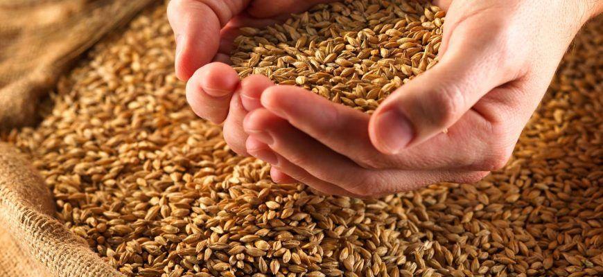 «Это прямо противоположный эффект!»: зерновое эмбарго России раскачало мировые цены