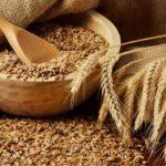 Прогнозы урожая снижаются, экспортные зерновые цены растут
