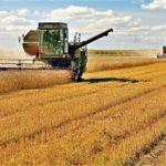 В Псковской области приступили к уборке зерновых