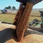 Аграрии Орловской области намолотили более 75 тыс. тонн зерна