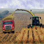 С COVIDом на урожай