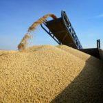 Первый миллион зерна нового урожая 2020 на Дону собрала птицеводческая фабрика