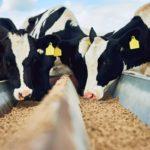 В России разработали новую технологию производства кормов для животных