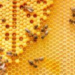 Пчеловоды Башкортостана отправили в США около двух килограмм меда