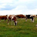 В северной осетии фермер обманул государство на 18 млн рублей