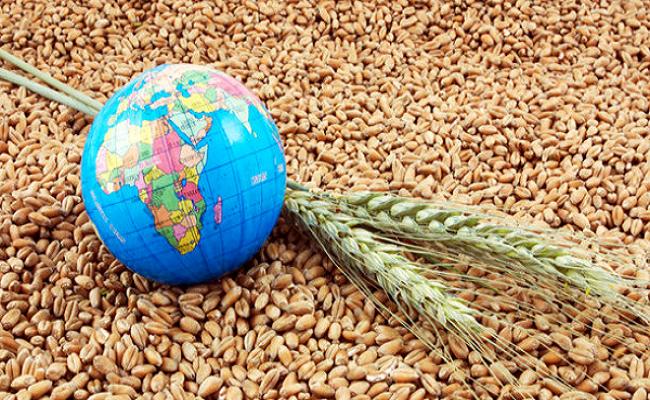 Зерно из России с 1 июля можно вывозить без ограничений