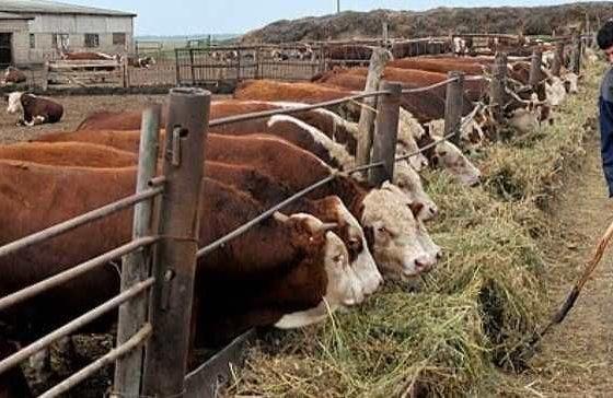 Костромская область упростила процедуру получения грантов для сельхозпроизводителей