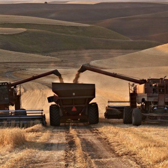 В уборке урожая в Ульяновской области задействовано более 1,5 тысяч зерноуборочных комбайнов