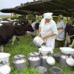 Объем реализации молока в сельхозорганизациях вырос на 5,4%