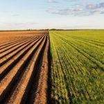 Инвестпроекты в сельском хозяйстве позволят ввести в Забайкалье 100 тысяч гектаров земель
