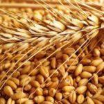РФ к 23 июля экспортировала 1,1 млн тонн пшеницы