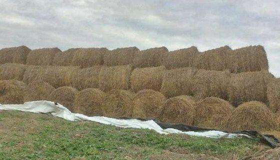 На Алтае убирают лен и заготавливают корма