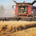 На 13 июля 2020 года в России намолочено 22,9 млн тонн зерна
