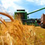 Кубань первой в РФ завершила уборку: получено 9,4 млн тонн зерна