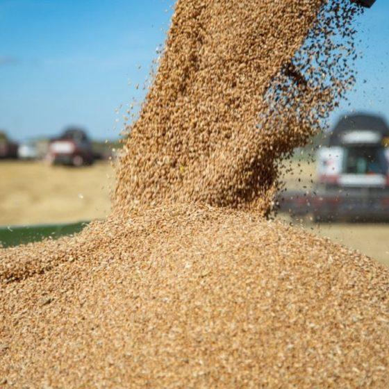 В Ростовской области убрано более четверти площадей зерновых культур