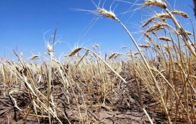 Ущерб от засухи в Омской области оценивают более чем в 6 млрд рублей