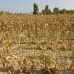 В Новосибирской области вводится режим ЧС в связи с засухой