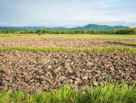 В Чувашии введено в оборот 3,6 тыс. га залежных земель