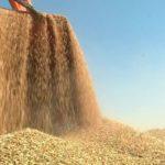 Россия сокращает экспорт зерна