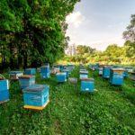 В Томской области появится новая органическая пасека на средства агростартапа