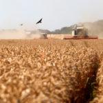Аграрии Ростовской области собрали самый большой урожай зерна