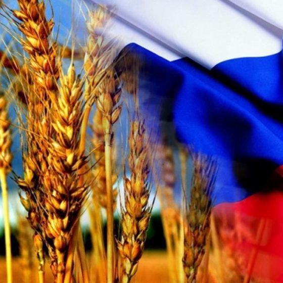 Россия может серьезно нарастить поставки зерна в Ливан