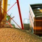 Экспортные цены пшеницы РФ выросли из-за сдержанных продаж со стороны фермеров