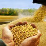 Минсельхоз опубликовал первые ставки пошлины на экспорт зерна в рамках теста демпфера