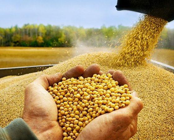 Россельхознадзор заявил, что экспорт сои из Приамурья сохранил объем в условиях пандемии