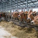 Ферма по выращиванию КРС и мясопереработке под Смоленском будет модернизирована