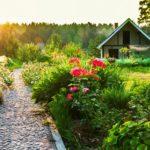В Дагестане быстрыми темпами развивается садоводство