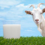 Фермеры в Алтайском крае сливают козье молоко в канализацию
