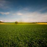 Рост цен на удобрения привел к сокращению закупок в 2 раза: Забайкальский край