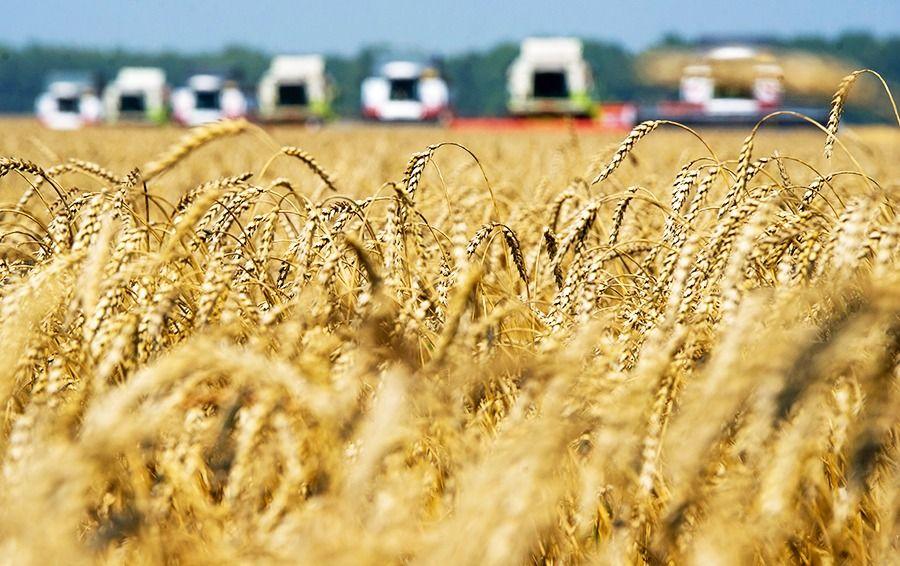 Прибывшие на Алтай представители Минсельхоза и Россельхозцентра оценят состояние пострадавших от засухи посевов