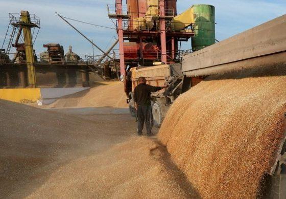 Регионы Сибири способны собрать 15 млн тонн зерновых