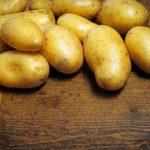 Новые сорта картофеля тестируют в Вологодской области