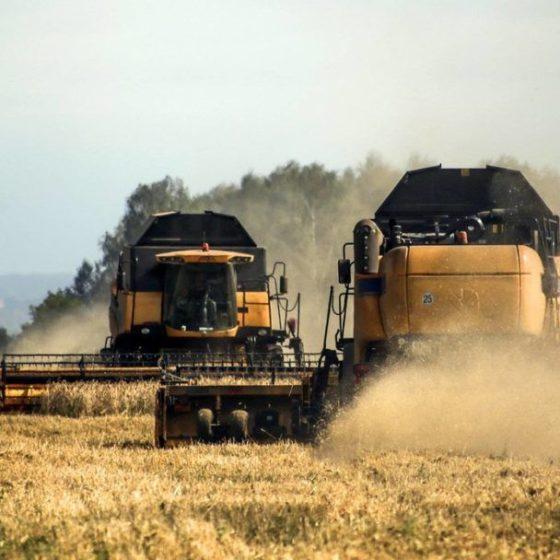 В Ленинградской области предстоит убрать 134,3 тыс. тонн зерна
