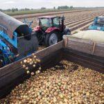 Урожай картофеля вырос в Ставропольском крае