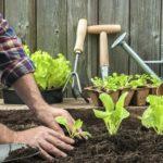Около 30 млн рублей направят на развитие садоводства в Нижегородской области