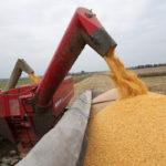 Воронежская область собрала рекордные 6 млн тонн зерна