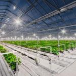 Якутский инновационный тепличный комплекс признан лучшим в России