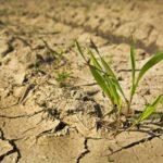 Ученые сделали растения засухоустойчивыми благодаря метаболизму