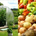 В российских теплицах в 2020 году собрано более миллиона тонн овощей