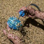 В Великобритании создали робота для мониторинга качества зерна