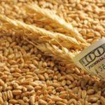 Казахстан лидирует по закупкам оренбургского зерна