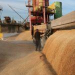 Мишустин заявил, что урожай зерна в России позволяет наращивать экспорт