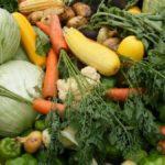Аграрии Липецкой области собрали более 104 тыс. тонн овощей
