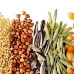 Производителей масличных в Тамбовской области простимулируют рублем